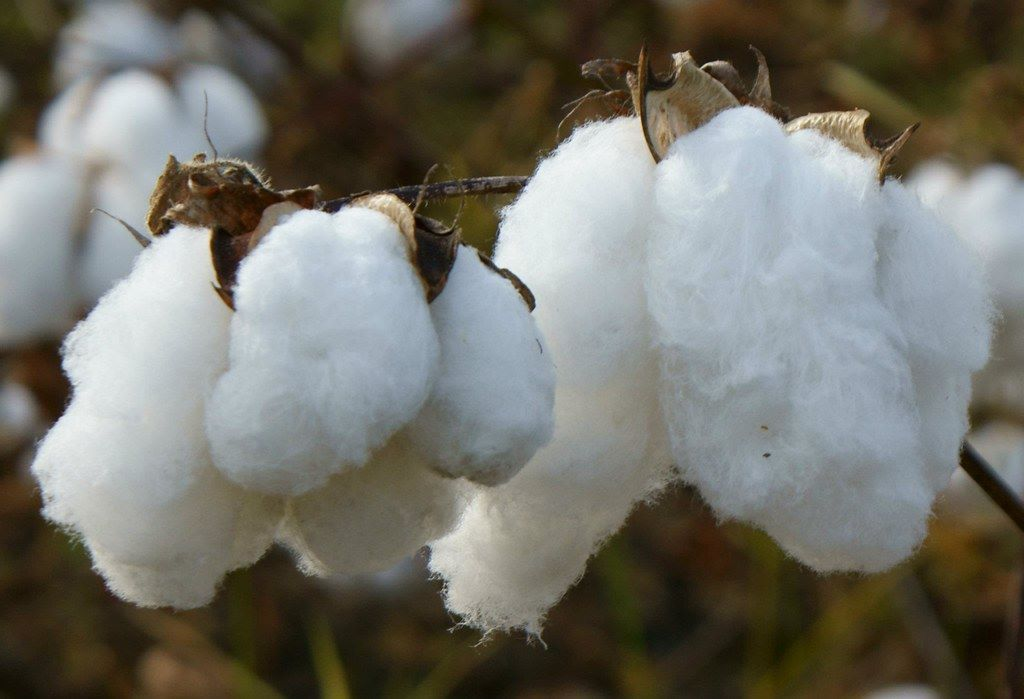 L'obiettivo della sostenibilità – Perché' conviene usare gli asciugamani di cotone